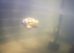 Łódź podwodna w nowo założonym oczku wodnym