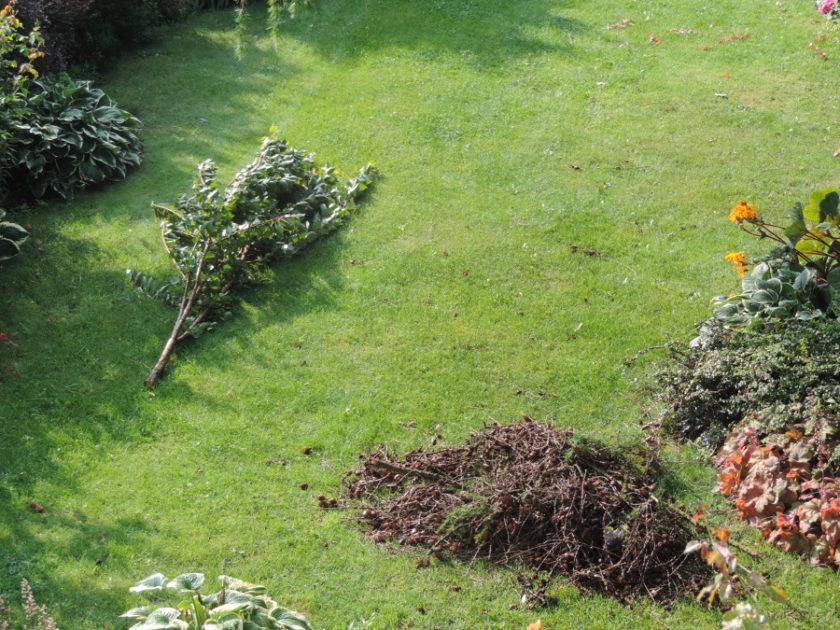 Efekt przejścia huraganu w ogrodzie
