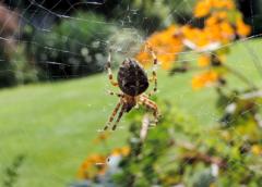 Jak pozbyć się much i komarów z domu i ogrodu