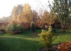 Jesiennie kolorowo zrobiło się w ogrodzie