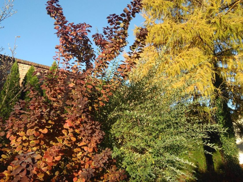 Jesienne kolory w ogrodzie