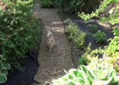 Ścieżka ogrodowa z drewna w 2 minuty