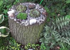 Donica ogrodowa z pnia drzewa