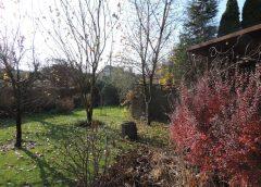Pełnia jesieni w ogrodzie