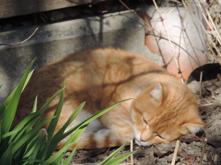 Pusia przespała cały dzień w nasłonecznionym miejscu ogrodu, ostatecznie ma już 14 lat