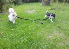 Maja i Lusia pierwszy wspólny spacer w ogrodzie