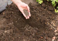 Nawozy rolnicze i ogrodnicze – kiedy i jak je stosować?