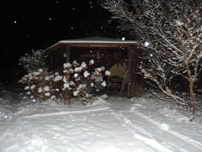 Zimowy ogród