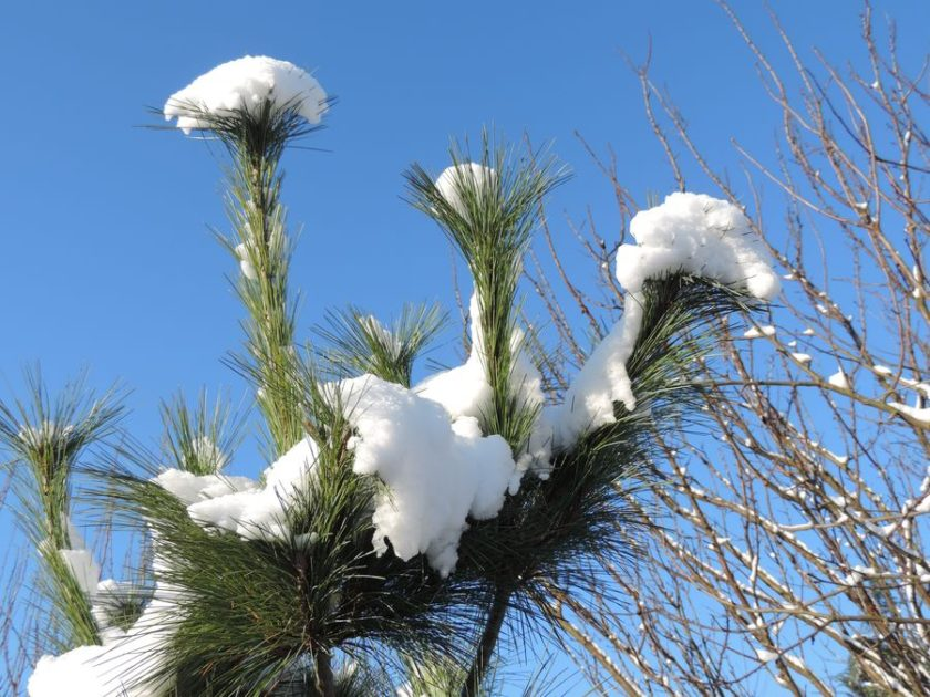 śnieżny ogród