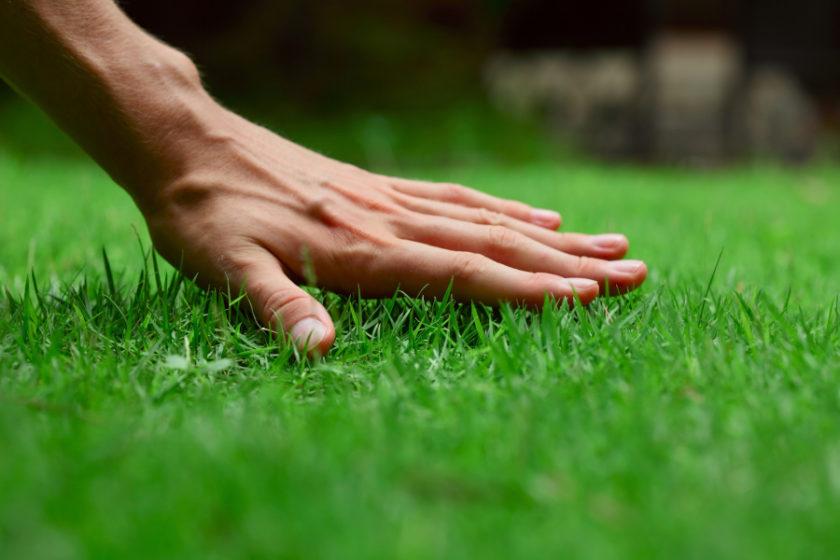 Czy każdy trawnik potrzebuje wertykulacji?