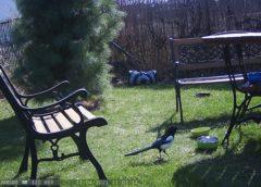Sekretne życie ogrodu cz.1 Kto czyści psią miskę?